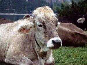 gaeejk19-300x225 dans Des videos vaches